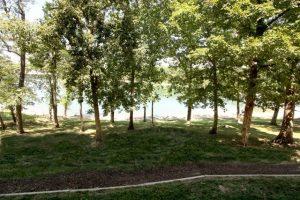 Trees and lake at Vickery Resort